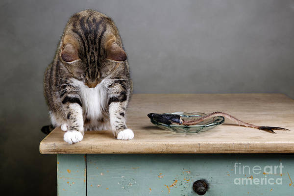 Cat Print featuring the photograph Caught In The Act by Nailia Schwarz