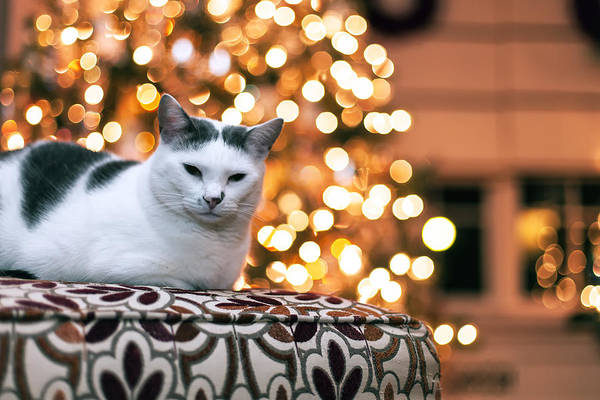 Pet Print featuring the photograph Charly And The Xmas Tree by Edward Kreis