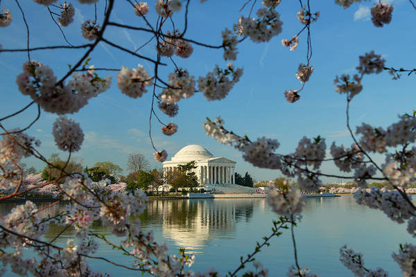 Architectural Print featuring the photograph Cherry Blossoms 2013 - 039 by Metro DC Photography