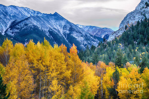 Autumn Print featuring the photograph Colorful Crested Butte Colorado by James BO Insogna