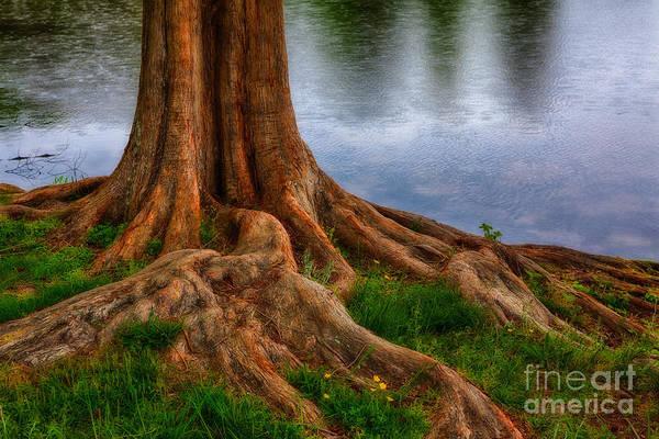 North Carolina Print featuring the photograph Deep Roots - Tree On North Carolina Lake by Dan Carmichael