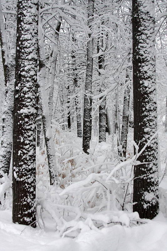 Winter Scene Print featuring the photograph Deep Snow In The Forest by Lynn-Marie Gildersleeve