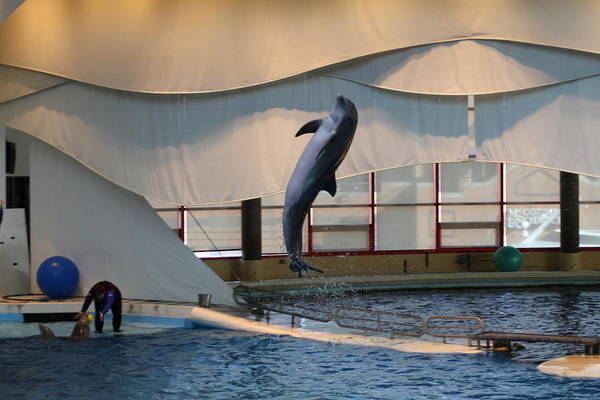 Inner Print featuring the photograph Dolphin Show - National Aquarium In Baltimore Md - 121255 by DC Photographer