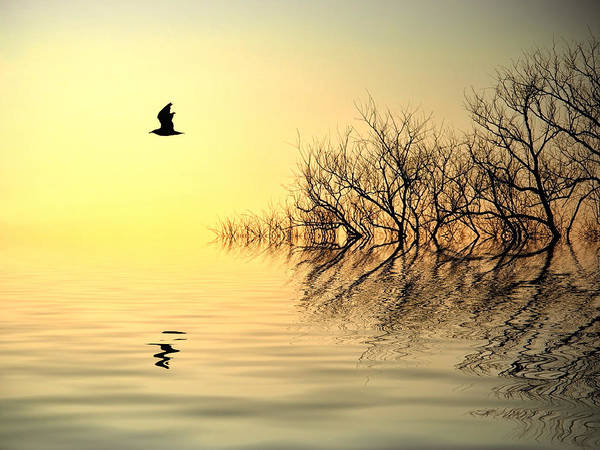 Reflections In Water Print featuring the photograph Dusk Flight by Sharon Lisa Clarke