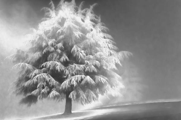 Beauty Print featuring the photograph Enlightened Tree by Don Schwartz
