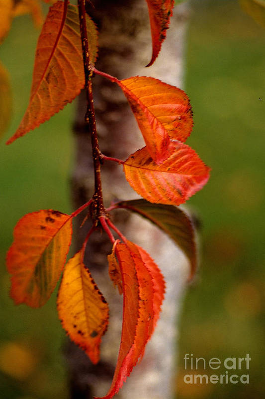 Fall Print featuring the photograph Fall Beauty by Sharon Elliott