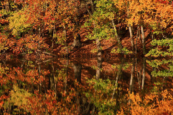 Autumn Print featuring the photograph Fall Reflections by Karol Livote