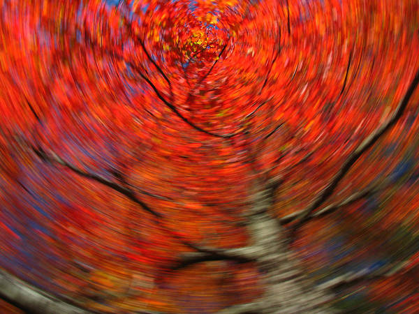 Intentional Camera Movement Print featuring the photograph Fall Tree Carousel by Juergen Roth