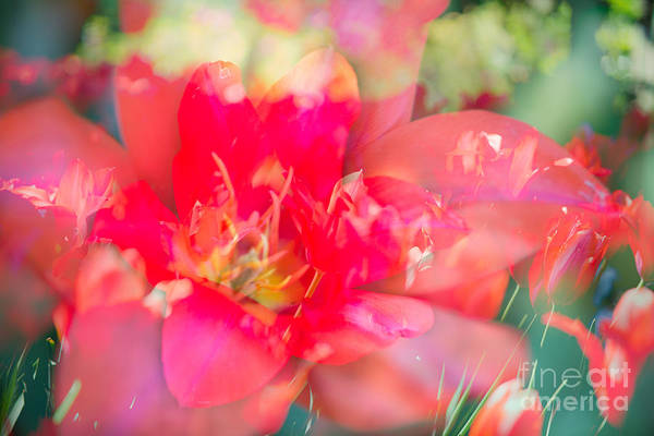 Flowers Print featuring the photograph Flowers Bloom In Multiples by Sonja Quintero