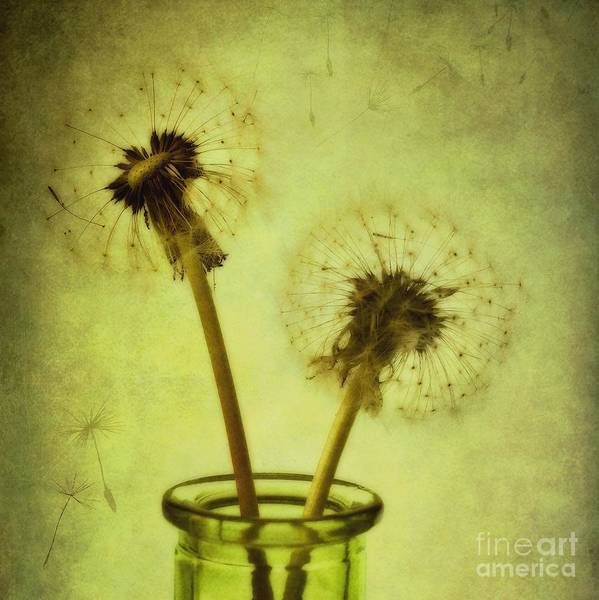 Dandelion Print featuring the photograph Fly Away by Priska Wettstein