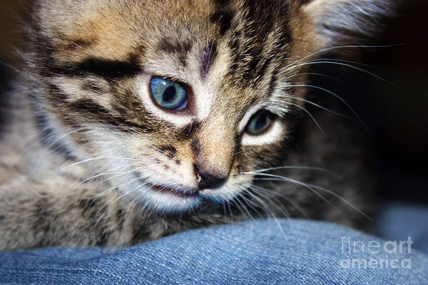 Gizmo Print featuring the photograph Gizmo Feeling Blue by Terri Waters
