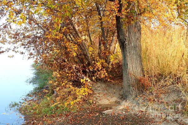 Autumn Print featuring the photograph Golden Riverbank by Carol Groenen