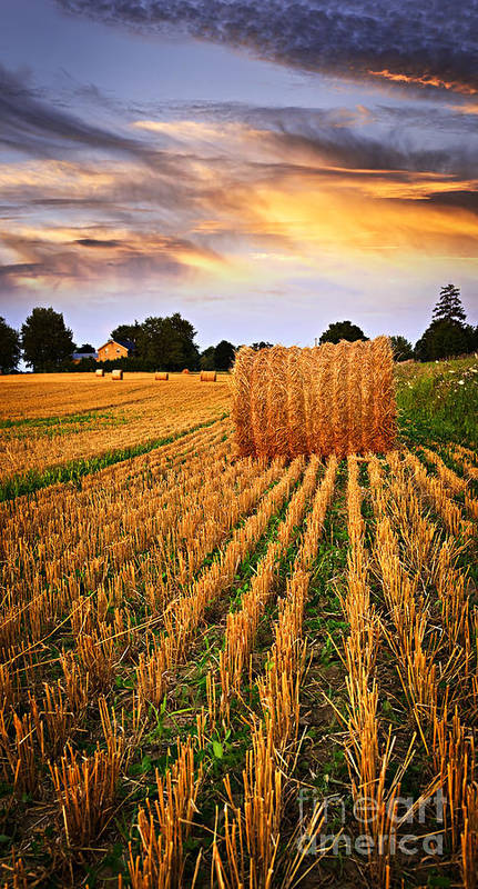 Farm Print featuring the photograph Golden Sunset Over Farm Field In Ontario by Elena Elisseeva