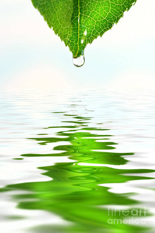 Background Print featuring the photograph Green Leaf Over Water Reflection by Sandra Cunningham