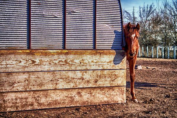 Horse Print featuring the photograph Hidden Horse by Ian Van Schepen