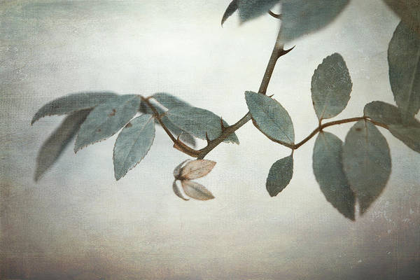 Leaves Print featuring the photograph How Delicate This Balance by Laurie Search