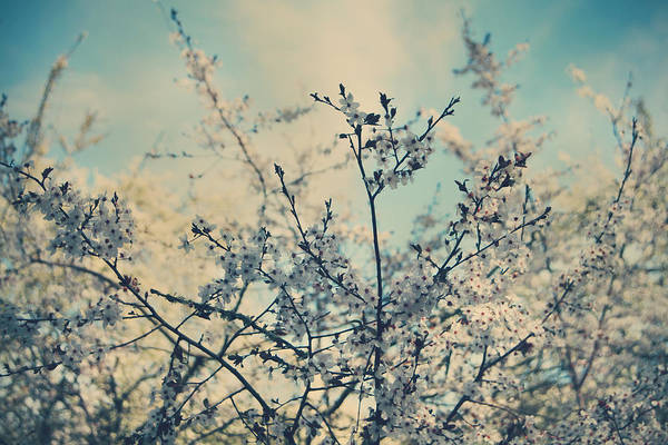 Spring Print featuring the photograph I Hope Spring Will Be Kind by Laurie Search