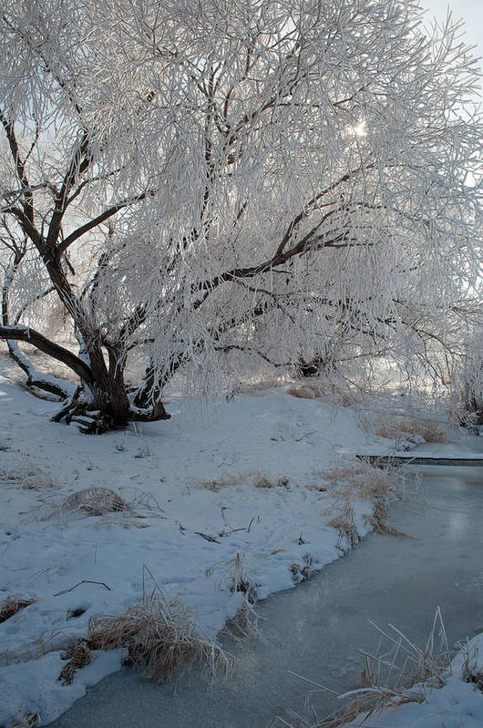 Montana Print featuring the photograph Ice Covered Tree And Creek In Montana by Bruce Gourley