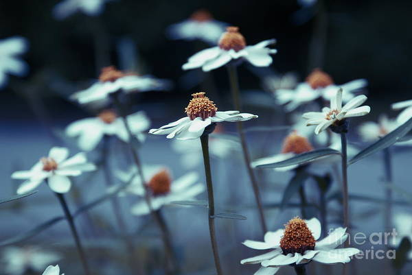Daisies Print featuring the photograph Imagine F03a by Variance Collections