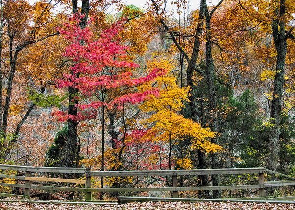Indiana Print featuring the photograph Indiana Fall Color by Alan Toepfer