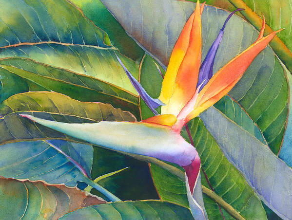 Bird Of Paradise Print featuring the painting Its A Bird by Judy Mercer