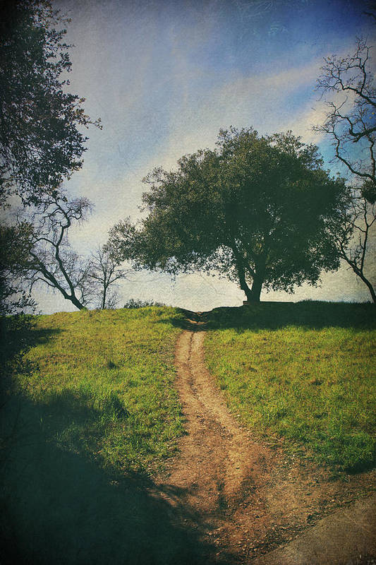 Lafayette Reservoir Recreation Area Print featuring the photograph It's Time To Get Up That Hill by Laurie Search
