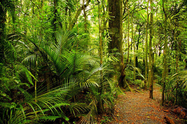 Forest Print featuring the photograph Jungle Scene by Les Cunliffe