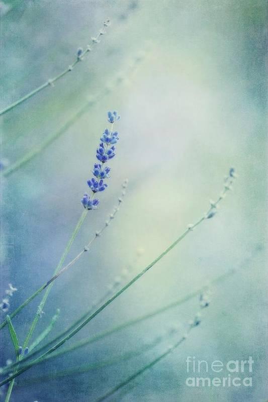 Lavender Print featuring the photograph Laggard by Priska Wettstein