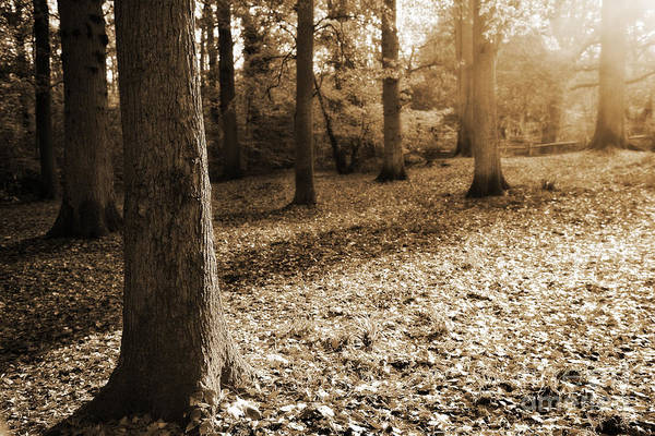 Autumn Print featuring the photograph Leafy Autumn Woodland In Sepia by Natalie Kinnear