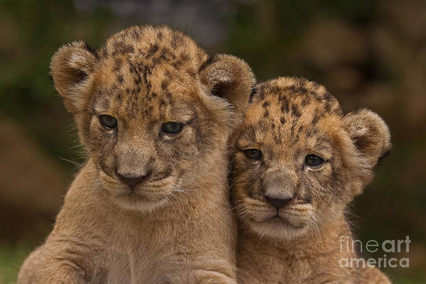 Adorable Print featuring the photograph Lean On Me by Ashley Vincent