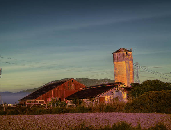 Petaluma Print featuring the photograph Leaning Silo by Bill Gallagher