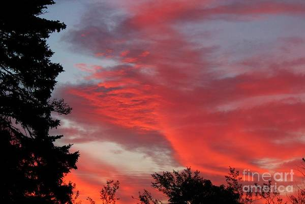 Lobster Sky Print featuring the photograph Lobster Sky by Barbara Griffin