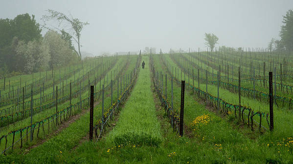 Vine Print featuring the photograph Lone Figure In Vineyard In The Rain On The Mission Peninsula Michigan by Mary Lee Dereske