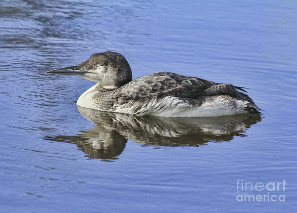 Loon Print featuring the photograph Loon On Vacation by Deborah Benoit