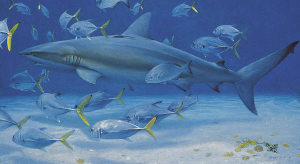Caribbean Reef Shark Print featuring the painting Lost Treasures by Randall Scott