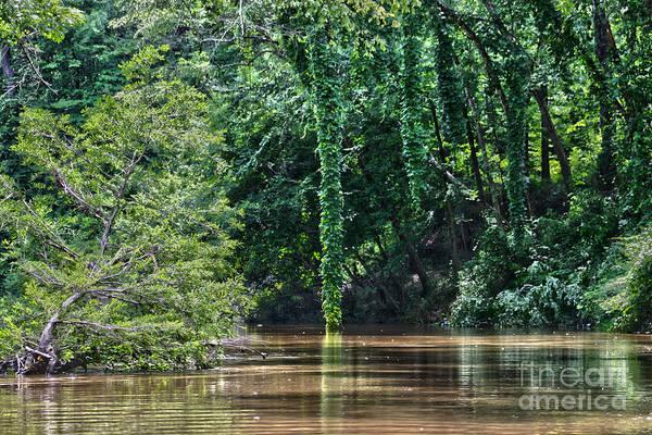 Cypress Print featuring the photograph Louisiana Bayou Toro Creek Swamp by D Wallace