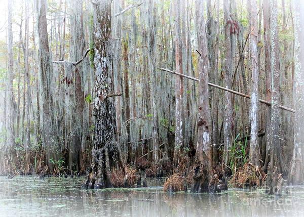 Louisiana Print featuring the photograph Magical Bayou by Carol Groenen