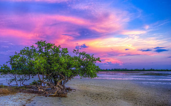 Mangrove By The Bay Print by Marvin Spates