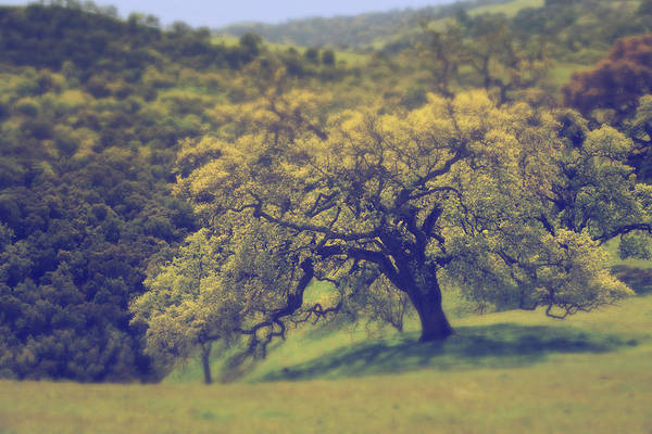 Sunol Regional Wilderness Print featuring the photograph Maybe It's Better This Way by Laurie Search