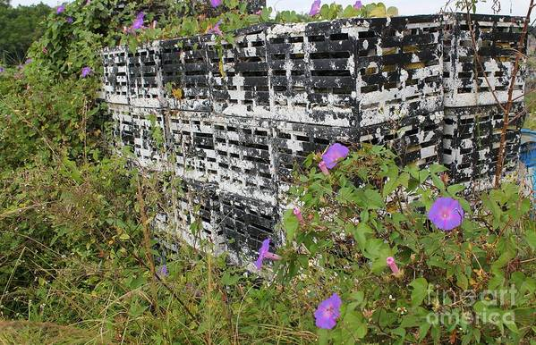 Morning Glories Print featuring the photograph Morning Glories And Crab Traps by Theresa Willingham