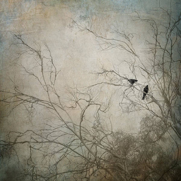 Raven Print featuring the photograph Nevermore... by Amy Weiss