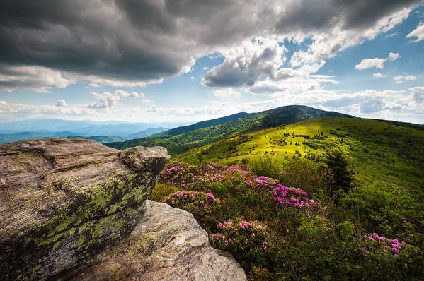Roan Mountain Print featuring the photograph North Carolina Blue Ridge Mountains Roan Rhododendron Flowers Nc by Dave Allen