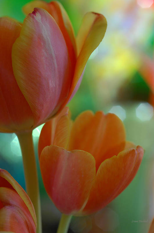 Tulips Print featuring the photograph Nothing As Sweet As Your Tulips by Donna Blackhall