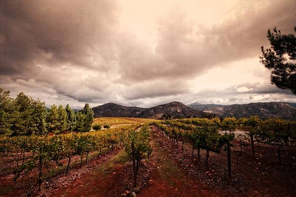 Winery Print featuring the photograph Orfila by Ryan Weddle