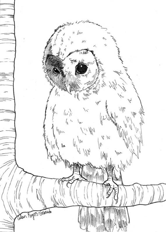 Baby Owl Print featuring the drawing Owl Baby by Callan Rogers-Grazado