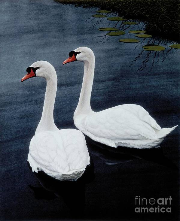 Swans Print featuring the painting Partners by Michael Swanson
