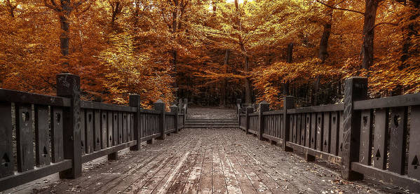 Landscape Print featuring the photograph Path To The Wild Wood by Scott Norris