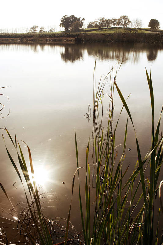 Water Print featuring the photograph Pond by Les Cunliffe