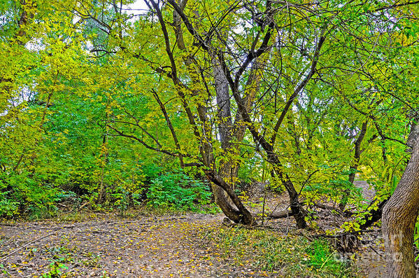 Fall Print featuring the photograph Poudre Trees-2 by Baywest Imaging