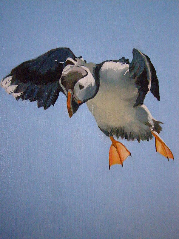 Wildlife Print featuring the painting Puffin Landing by Eric Burgess-Ray